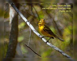 Daily Scripture Art Psalm 38 15